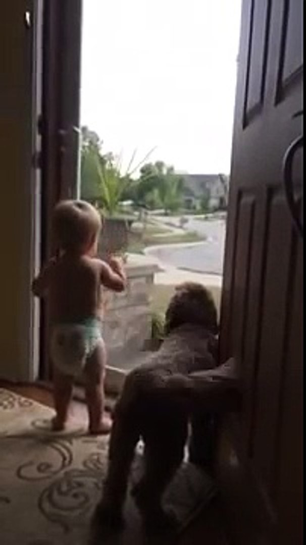 Daddy's home! Baby and dog jump for joy as father gets home - The United Pets