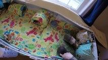 GoPro: Pet Room Tour & Guinea Pig, Bunny Updates!