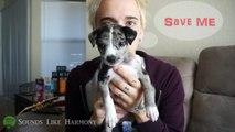 Meet My NEW Puppy! (FURRY FRIEND TAG!) | James Tyler Hagen