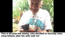 Grandpa's Wife Said He Couldn't Keep Stray Kittens, So He Raises Them Secretly