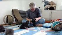 Roswell Kittens - Exploding Kitten