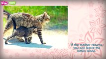 How to Take Care of a Stray Kitten - Kittens Rescued