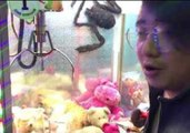 Cat Relaxes with Stuffed Animals Inside Claw Machine