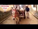 Whatsapp Viral V - Indian Funny Top Viral - desi Fun