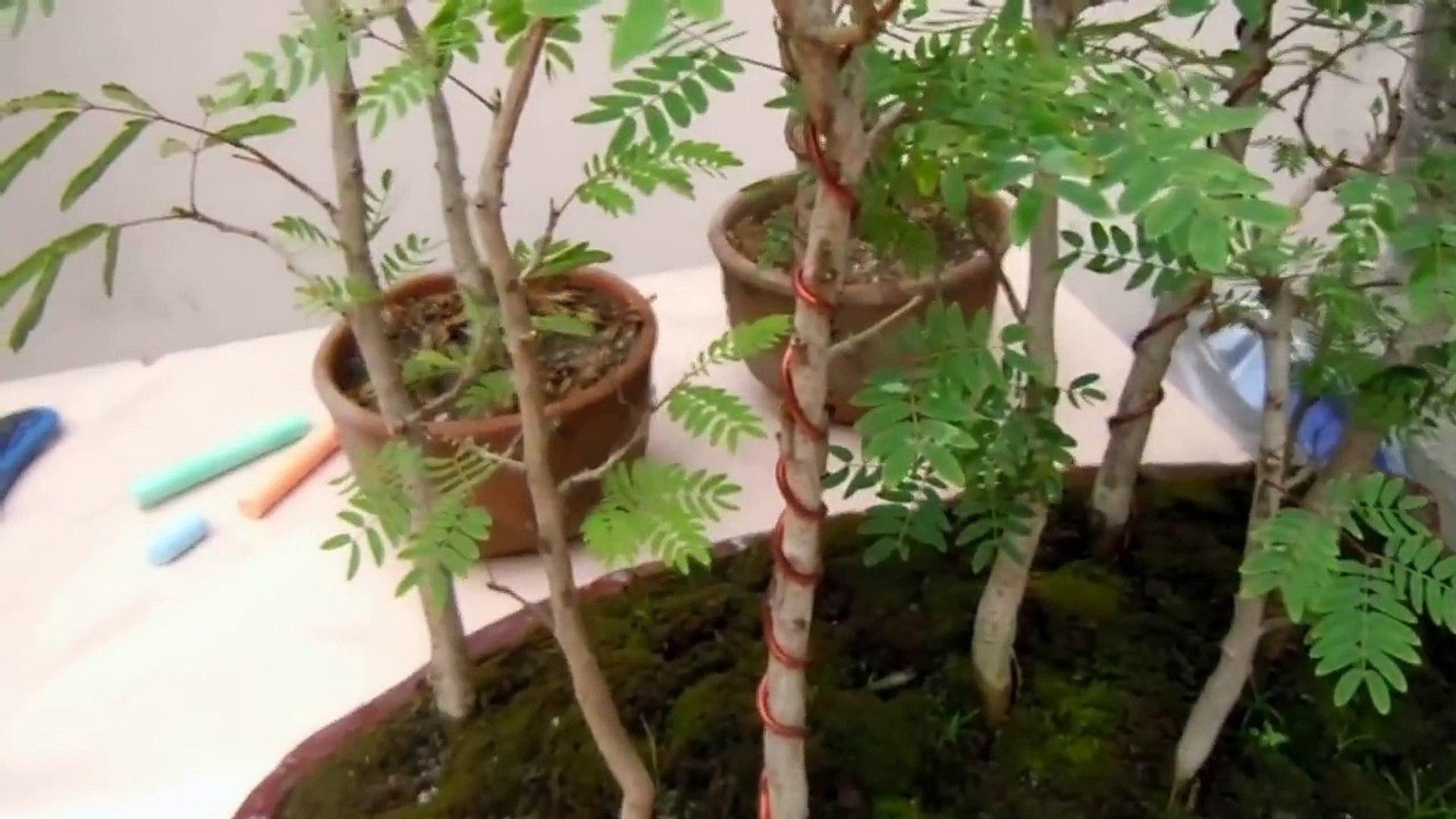 Bosques en miniatura 1° parte