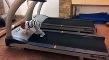 Baby on walking machine