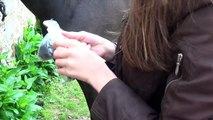 Comment faire des pions