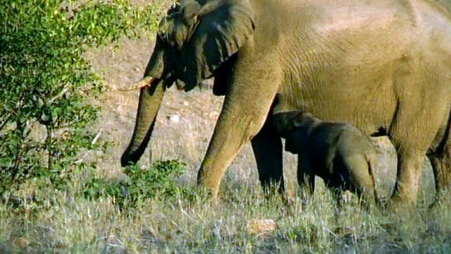 BBC Natural World 2008 - Elephant Nomads of the Namib Desert (TV)