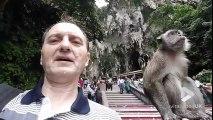 Faire un Selfie avec un singe..? Mauvaise Idée LOL