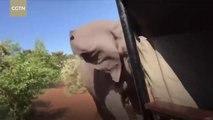 Des touristes en safari se font charger par un éléphant très en colère... Terrifiant