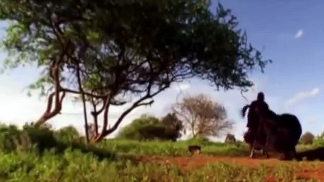 Lions Documentary: Lion & Man Killing Dance ( National Geographic Documentary)