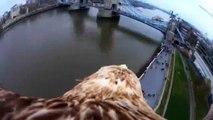 Águia sobrevoa pontos turísticos de Londres com câmera