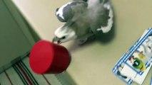 Les oiseaux sont pire que les chats quand il s'agit de faire des bêtises !