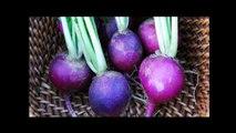 Plants Vs Zombies 2 Plantas en la Vida Real con Imágenes Plants In Real Life Plantas contra Zombies