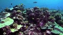 Oceanos saudáveis, planeta saudável