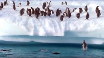 penguins can't fly...