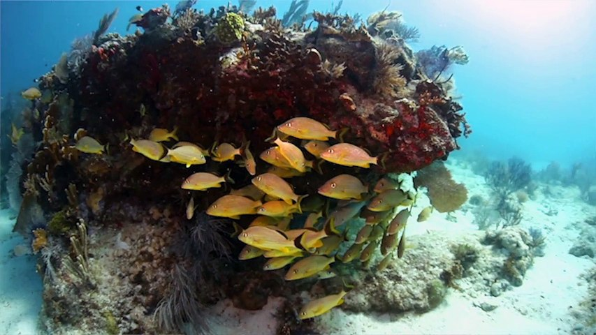 Explore The Florida Keys: Big Pine Key