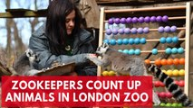 Over 19,000 animals counted during London zoo's annual stock take