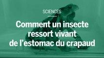 Comment un insecte oblige le crapaud à le vomir après l'avoir avalé