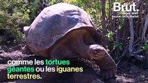 Le fragile écosystème des îles Galápagos entre touristes et espèces vulnérables