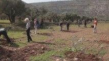 Rabinos israelíes reivindican la paz con Palestina plantando árboles en Cisjordania