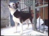 Kennel koiranruoka retro TV-mainos Koirasi parhaat ystävät sinä ja Kennel