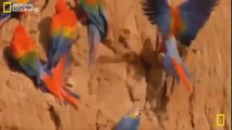 National Geographic Documentary 2015 - Amazon Forest Wildlife Full Documentary Film 2015