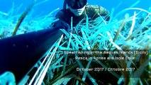 Spearfishing in the Aeolian Islands 2017 HD