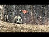 Wild boars - Wildlife in the DMZ EP01, #03, 멧돼지 무리들