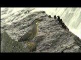 Hazel Grouse, White heron, Heron - Wildlife in the DMZ EP02, #09, 들꿩, 백로, 왜가리