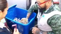 Un bébé tigre découvert par des douaniers dans un colis (Vidéo)