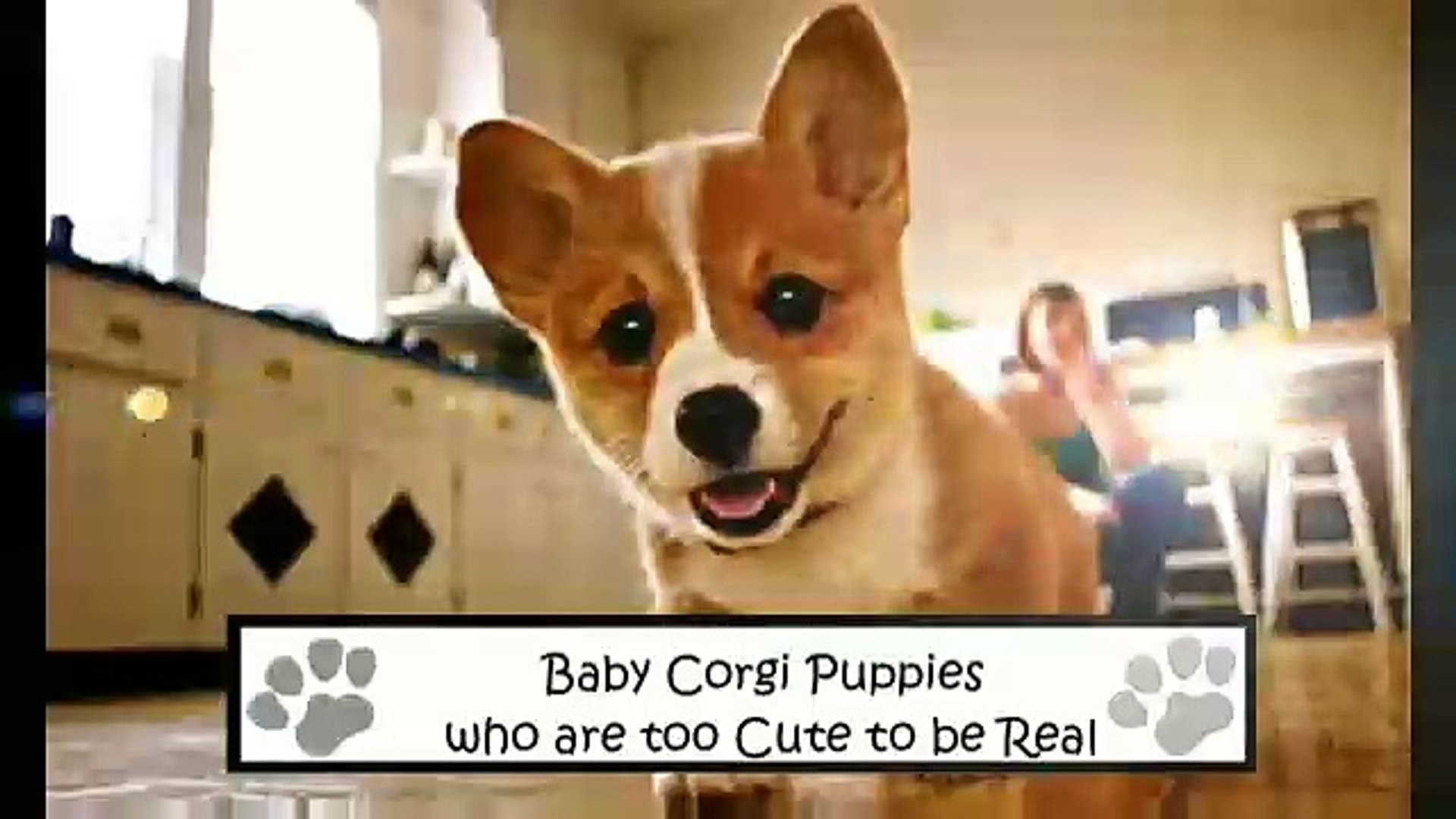 Baby Corgi Puppies Who Are Too Cute To Be Real Compilation Video Dailymotion