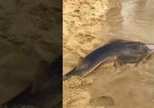 Tourists Watch in Awe as Man Catches Shark in Queensland, Australia
