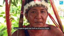 La bière amazonienne, une affaire de femmes