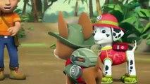 Paw Patrol Cartoon ✤ Pups Save Big Hairy ✤ Paw Patrol Full Episodes English - YouTube