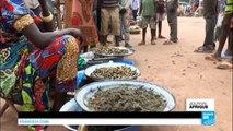 CENTRAFRIQUE - Les chenilles régalent les papilles