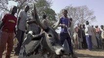 Le conflit agriculteurs/éleveurs s'intensifie au Nigeria