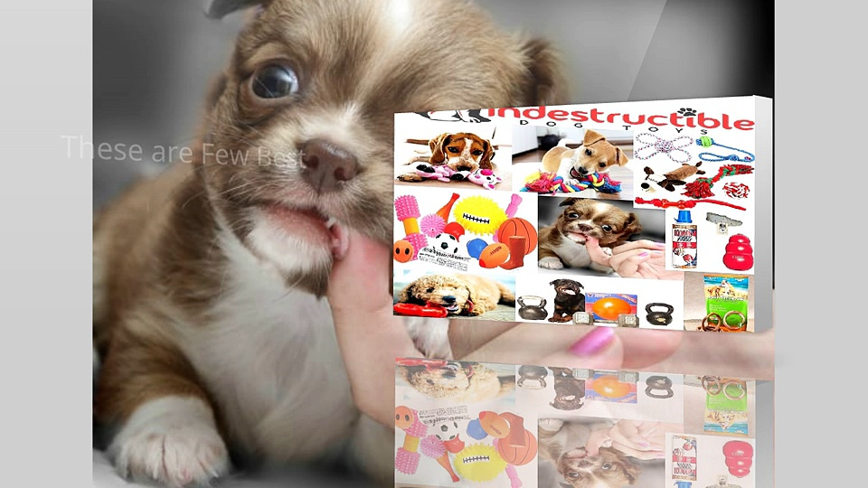 Buy Indestructible Dog Toys For Heavy Chewers
