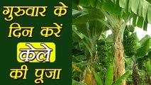 Banana Tree: केले के पेड़ का भगवान विष्णु से क्या है नाता, क्यूँ होती है गुरुवार को पूजा | Boldsky