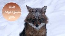 عندما تستمتع الحيوانات بأعلى نسبة تساقط للثلوج