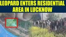 Leopard creates havoc in residential area in Lucknow, Uttar Pradesh Watch Video | Oneindia News