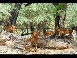 दिल्ली चिड़ियाघर का दीदार II Delhi Zoo II Chidiya Ghar II दिल्ली चिड़िया घर