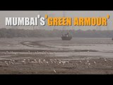 Sewri-Mahul creek: Mumbai's 'green armour'