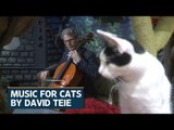 American Cellist cuts album for cats