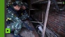 Chine : un python saisi par la police après avoir englouti une poule dans une maison