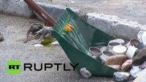 Corse : du verre brisé et des grenades  lacrymogènes dans les rues de Corte après une nuit d'émeutes