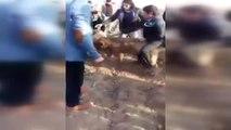 Fıstık Bahçesinde Kanlı Köpek Dövüşü! Köpekler Kanlar İçinde Bulundu