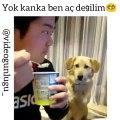Yemek Yiyen Sahibini İzleyen Köpek ;)
