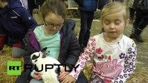 Grande-Bretagne: des lapins super mignons ont leur propre « Grand National »
