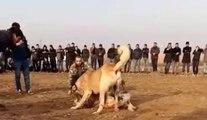Köpek ve Horoz Dövüşü Yapanlar Suçüstü Yakalandı!